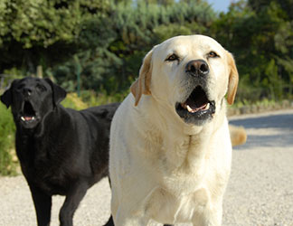 Best Antibiotic For Bone Infection In Dogs